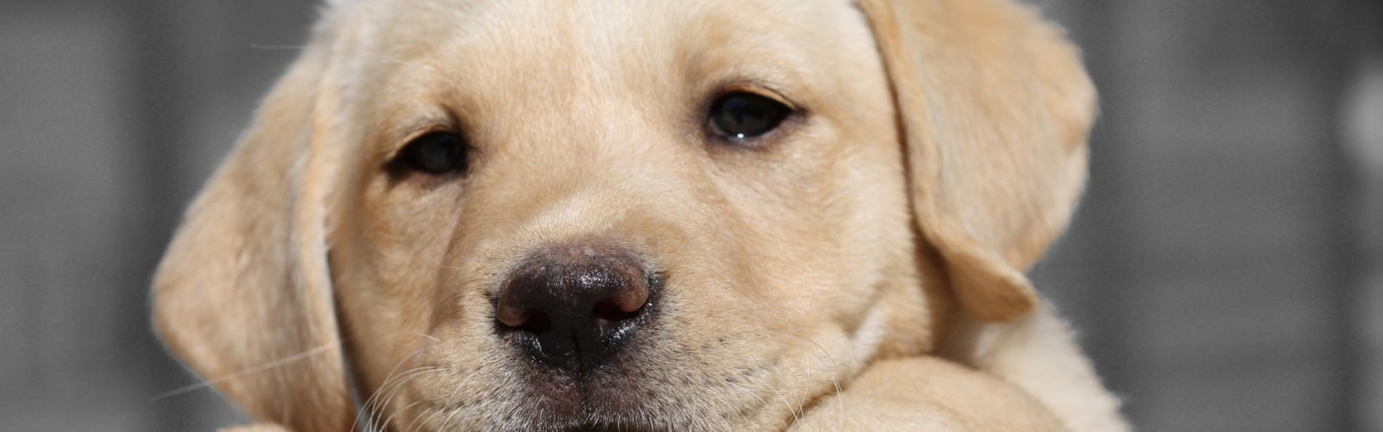 Wie wird mein Hunde-Welpe stubenrein?