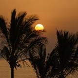 Sonnenaufgang unter Palmen