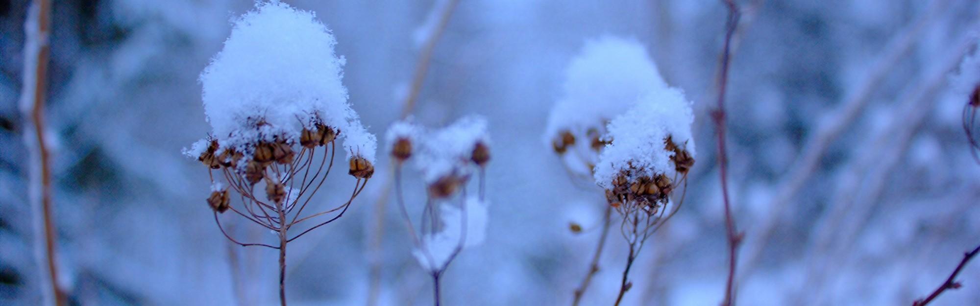 Wie komme ich gesund durch den Winter?