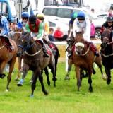 Dingle Races