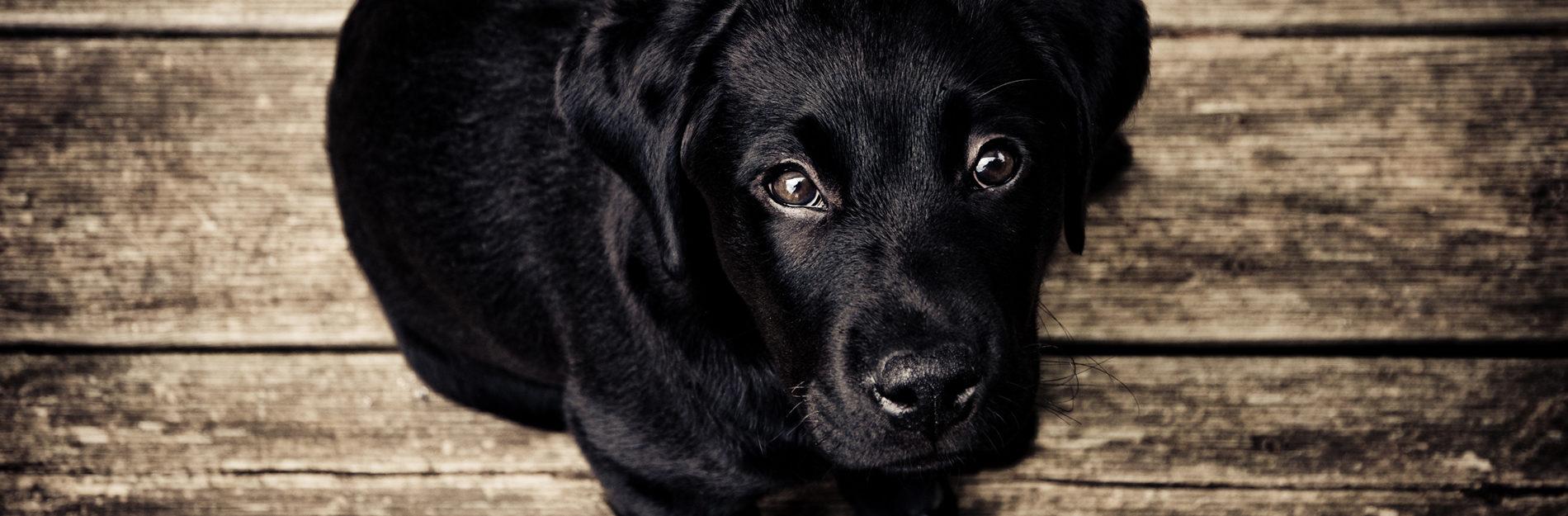 Wie entferne ich Zahnstein meines Hundes selbst?